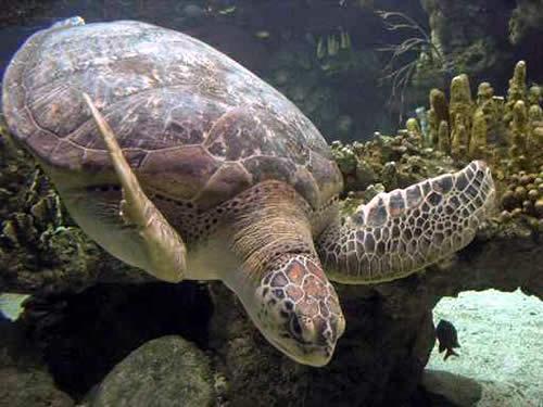 Tartarughe d acqua consigli per una corretta alimentazione for Alimentazione tartarughe acqua dolce
